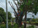 petugas-pln-memotong-dahan-pohon-di-muratara.jpg
