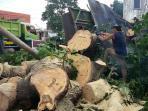 pohon-jarak-yang-tumbang-di-jalan-diponegoro-depan-rumah-makan-bebek-slamet_20160112_175356.jpg