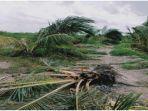 pohon-sawit-di-perkebunan-yang-hancur-akibat-amukan-gajah-sumatera-selasa-2322021.jpg