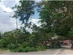 pohon-tumbang-di-jalan-lintas-ogan-ilir-palembang-dekat-terminal-karya-jaya-kamis-2392021.jpg