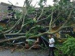 pohon-tumbang-gedung-poltekes-muara-enim-rusak.jpg