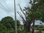 ptong-pohon121313.jpg