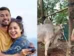 raffi-ahmad-berkurban-16-ekor-hewan-terdiri-sapi-dan-kambing.jpg