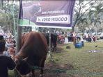 sapi-hewan-kurban-presiden-jokowi-di-masjid-agung-smb-i-jayo-wikramo-palembang-selasa-2072021.jpg