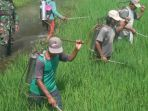sejumlah-petani-melakukan-semprot-masal-pestisida_20180415_193848.jpg