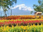 taman-bunga-bukit-mutiara-garden-danau-ranau-oku-selatan.jpg