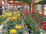 tanaman-hias-greenhouse-josephs-orchid-anggrek-senin.jpg