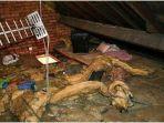 wanita-ini-kaget-temukan-ada-orang-tinggal-di-loteng-rumahnya-bertahun-tahun-dikira-tikus.jpg