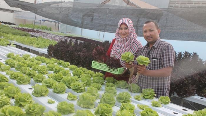 Kebun Sayur Pun Disulap Jadi Rantai Bisnis Menarik