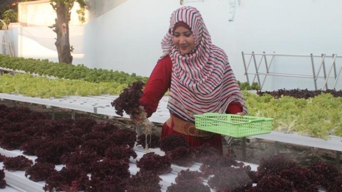 Ayem Tentrem Jalankan Bisnis Kebun Sayur Hidroponik