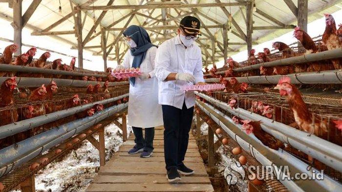 Beli dari Pelaku Ekonomi Lokal, Banyuwangi Gelontor Telur hingga Buah untuk Tenaga Kesehatan