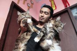 Promosi Jasa Perawatan Kucing Hanya Lewat BB dan Facebook