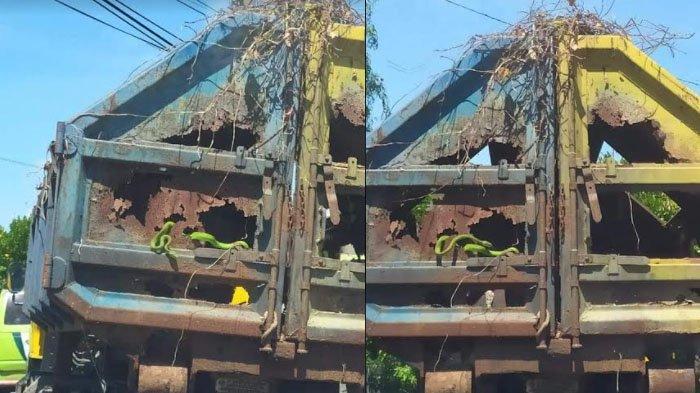 Video Viral Ular Muncul dari Belakang Truk Sampah yang Bolong di Gresik, Terekam Pengguna Jalan