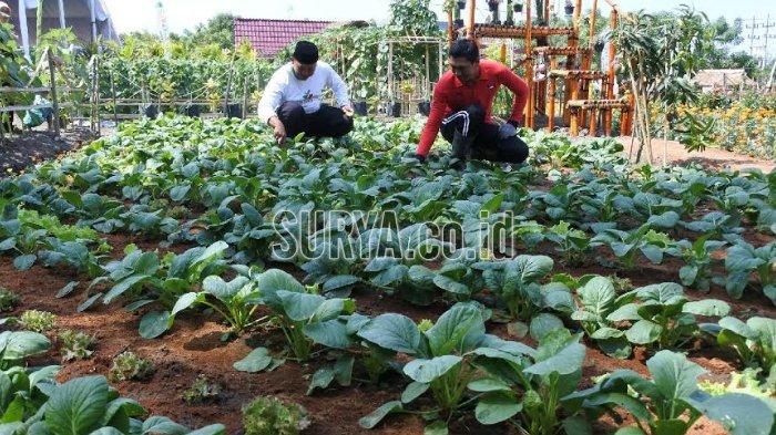Berbagai Varietas Pertanian Dipamerkan di Banyuwangi Agro Expo