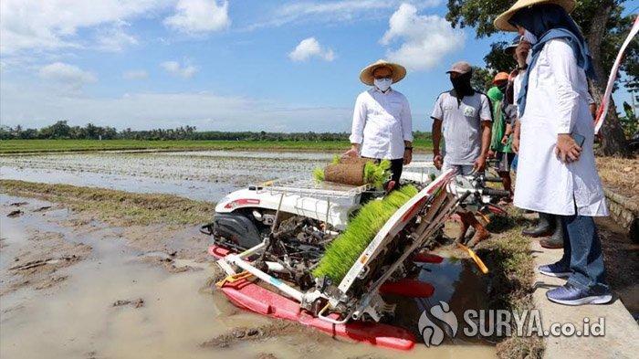 Bupati Anas Dorong Petani di Banyuwangi Manfaatkan Alsintan untuk Optimalkan Hasil Pertanian