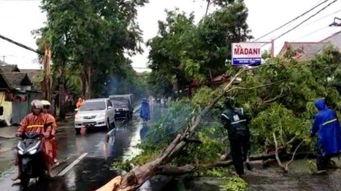 Belasan Pohon di Kota Kediri Tumbang Diterjang Angin Kencang