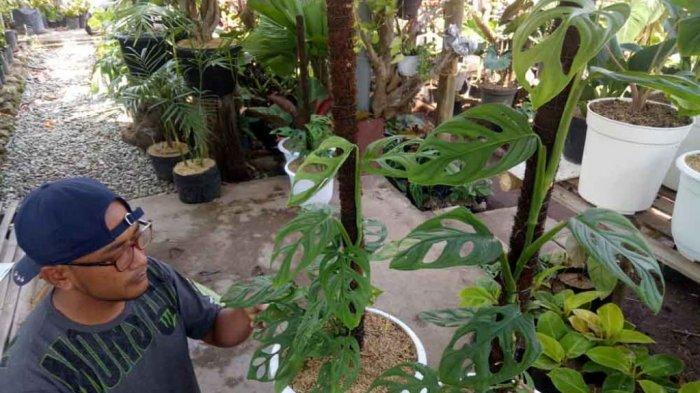 Peneliti LIPI Jelaskan Asal Nama Janda Bolong