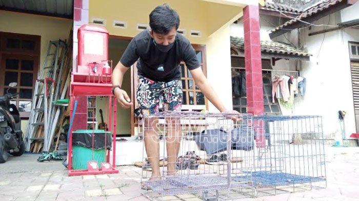 Relawan Gulung Tukar Tulungagung Siap Bantu Pelihara Hewan Warga yang Isolasi Mandiri
