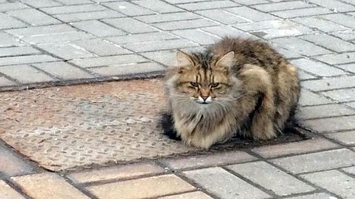 GALERI FOTO - Kisah Kucing Menunggu Tuannya Kembali Sejak Tahun Lalu Jadi Viral, Kasihan!