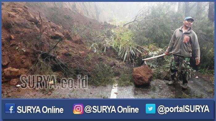 Berita Terbaru Erupsi Gunung Bromo: Puluhan Pohon Akasia Tumbang Terkena Abu Vulkanik
