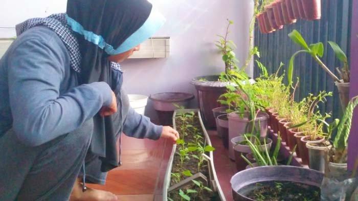 Bertanam di Teras Sempit, Salah Satu Siasat Bersahabat dengan Waktu di Tengah Pandemi