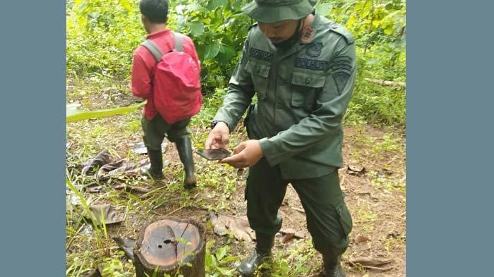 Pencuri Kayu di Kabupaten Blitar Beraksi saat Hujan Malam Hari