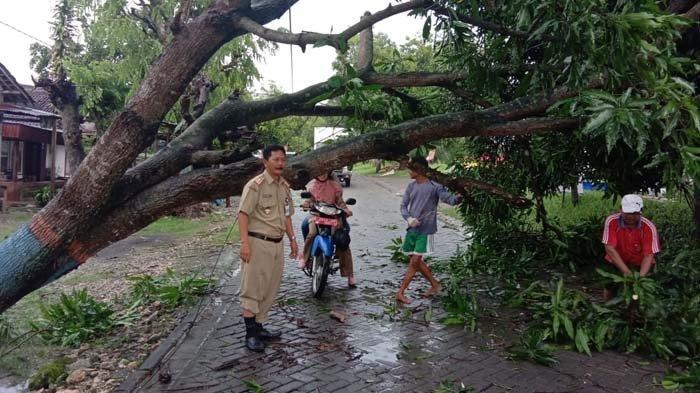 Hujan Deras dan Angin Kencang, 2 Rumah di Bojonegoro Tertimpa Pohon Tumbang