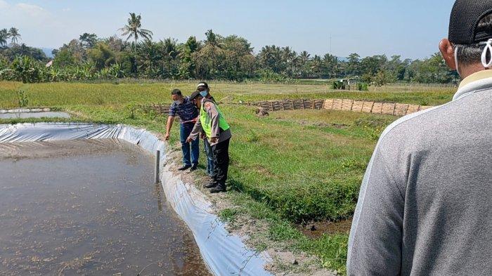 Bos Ikan Koi Blitar Tewas Telungkup di Kolam