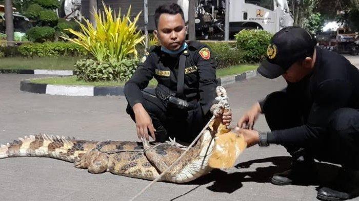 Remaja Pemilik Buaya 2 Meter di Jl Gresikan Surabaya Sedih Binatang Peliharaannya Dievakuasi Petugas