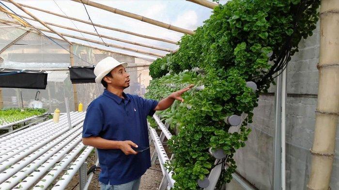 Tak Lagi Menekuni Mesin, Pria Kediri Ini Sukses Bertani Hidroponik; Baru Setahun Mampu Tembus Pasar