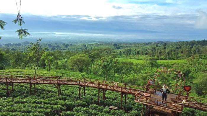 Spot Instagramable di Lereng Gunung Arjuna, Bukit Kuneer Wonosari, Malang Cocok buat Refreshing
