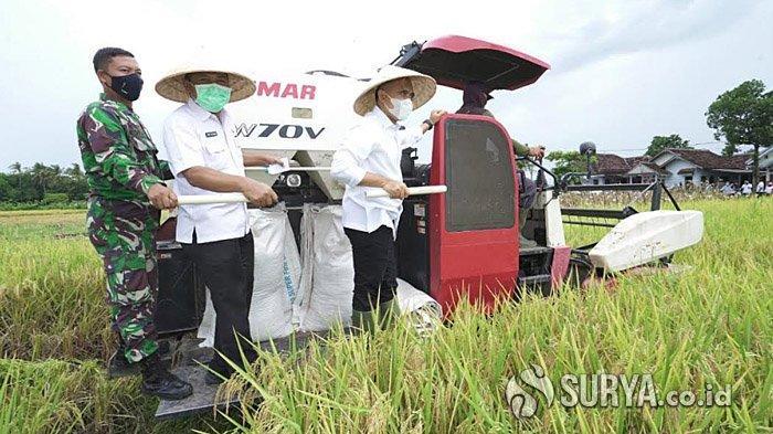 Meski di Masa Pandemi, Kinerja Pertanian Padi Banyuwangi Lampaui Target