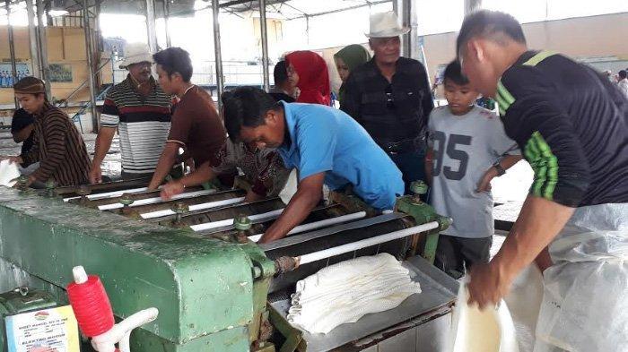 Melihat Cara Membuat Karet dari Pabrik Berusia 100 Tahun di Jember