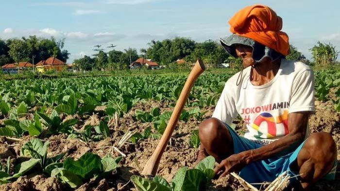 BPS: NTP Naik 0,99 Persen, Kesejahteraan Petani Jawa Timur Meningkat
