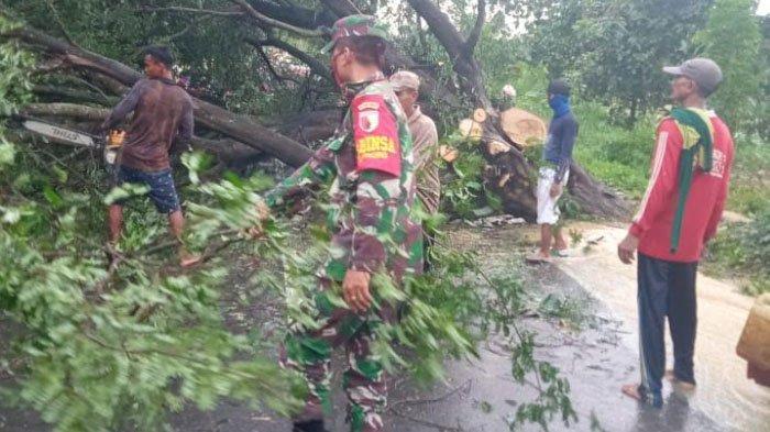 Babinsa Bareng Warga Desa Takerharjo Lamongan Bersihkan Pohon Tumbang Akibat Hujan Deras