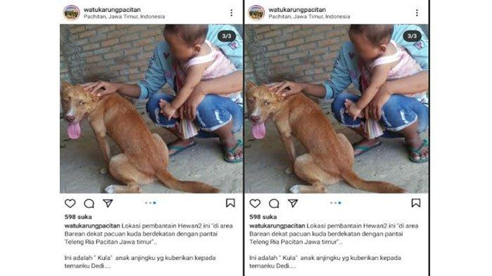 Viral Pembantaian 11 Anjing di Kabupaten Pacitan, Diduga Gara-gara Gigit Ternak Kambing