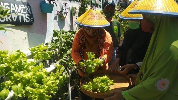 Untuk Ketahanan Pangan, DKPP Kembangkan Konsep Urban Farming ke Belasan Kampung di Surabaya