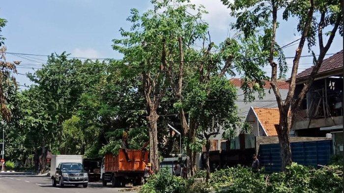 Peralihan Musim, DKRTH Surabaya Pangkas Ranting Pohon Kota