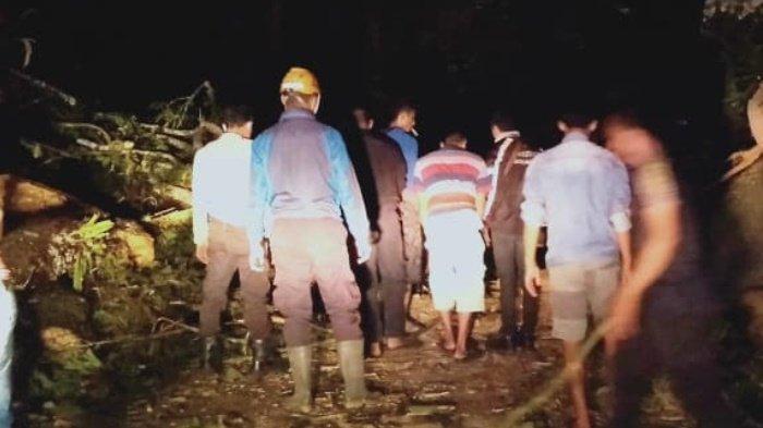 Dua Pohon Besar Tumbang Sempat Tutup Jalan Nasional Lumajang-Malang