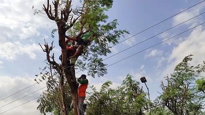 Pria di Mojokerto Meninggal Tersengat Listrik, Jasad Korban Tersangkut di Atas Pohon Lamtoro