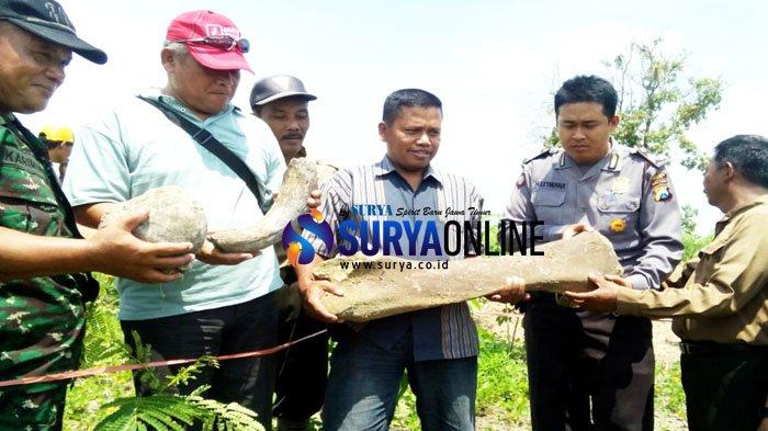Dikira Bonggol Jati, Petani Ngawi Temukan Fosil Gajah Stegodon, Tak Cuma Satu
