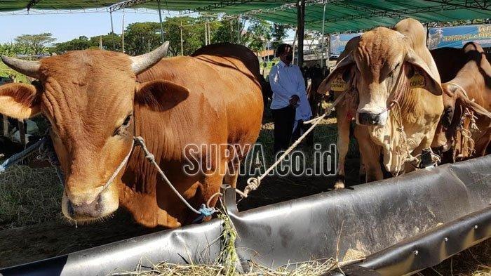 Ada Empat Tim untuk Menyembelih Hewan Kurban di RPH Kota Blitar