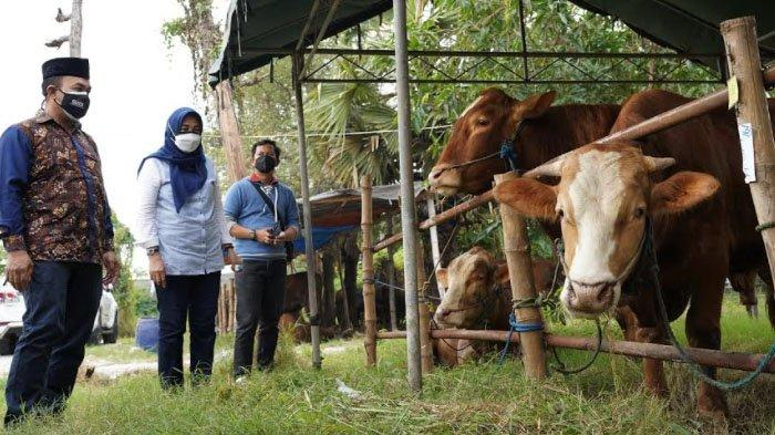 SIG Salurkan Ratusan Hewan Kurban kepada Masyarakat Sekitar Perusahaan di Tengah Pandemi Covid-19