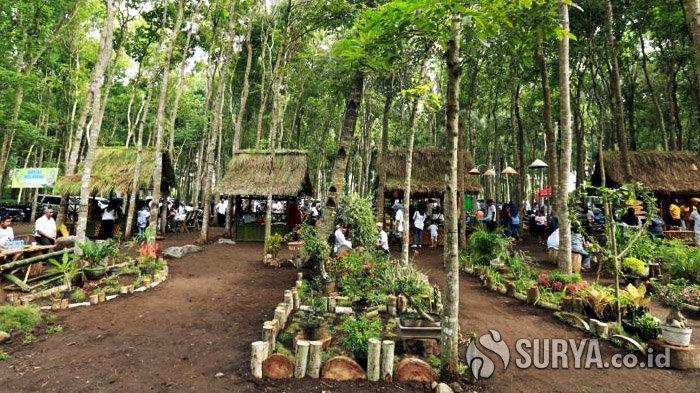 Glenmore Food Market Banyuwangi, Wisata Kuliner di Hutan Mahoni