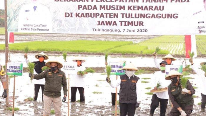 Gubernur Percepat Tanam Padi di Tulungagung, Antisipasi Krisis Pangan dan Wujudkan Ketahanan Pangan