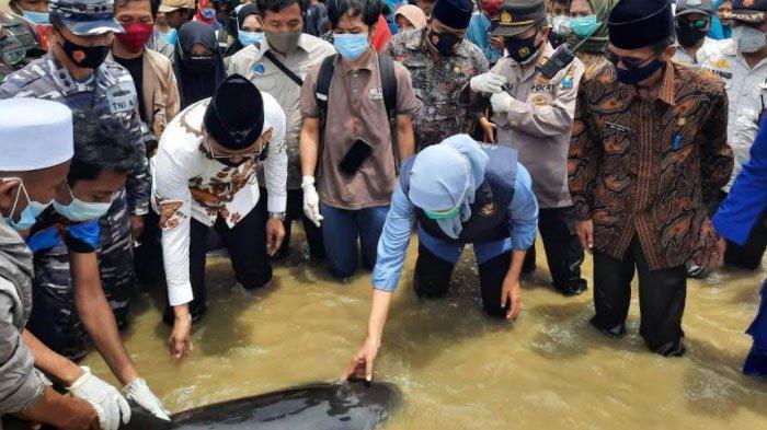 Gubernur Khofifah Lepas 3 Ekor Paus yang Terdampar di Perairan Paling Ujung Bangkalan Madura