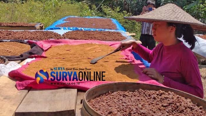 Penjualan Sempat Anjlok, Begini Cara Bisnis Gula Semut SAE Lumajang Tetap 'Cuan' di Pandemi