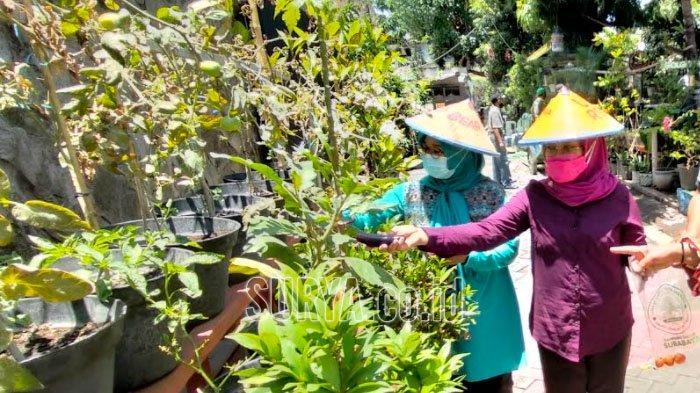 Guru SD Belajar Penghijauan di Kampung Sayur Simomulyo Baru Kota Surabaya