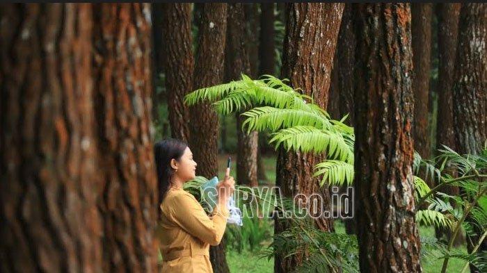 Menepi Sejenak dari Penatnya Suasana Perkotaan di Hutan Pinus Semeru Kabupaten Malang