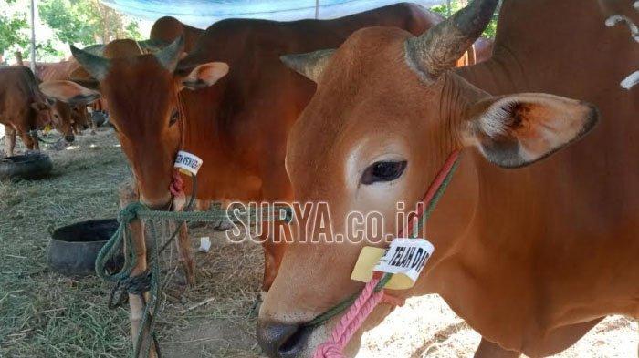 Angkutan Hewan Kurban Boleh Keluar Masuk Kabupaten/Kotadi Jatim asal Ada Dua Dokumen ini